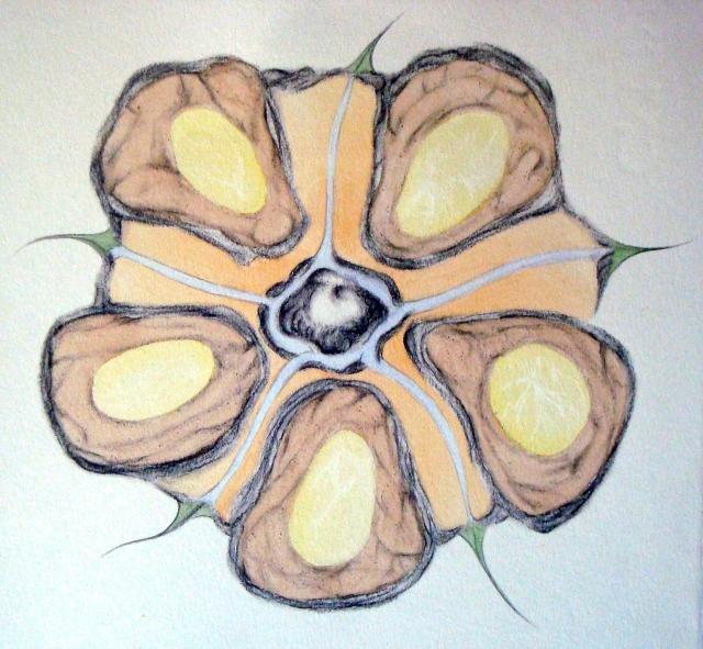 yellowhouse flower